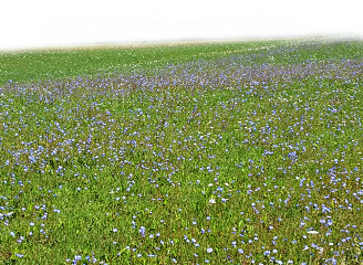 freetoedit background meadow field perspective