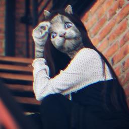 freetoedit cat madewithpicsart mrlb2000 remix