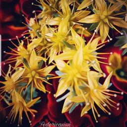 flower fioregiallo naturelove