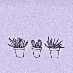 freetoedit purple aesthetic plants cactus