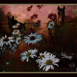 freetoedit flowes horses daisies horse