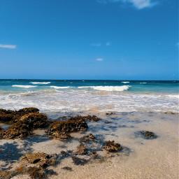 freetoedit myphotography naturephotography myhometown puertorico