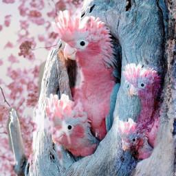 freetoedit remix picsart parrots flowers