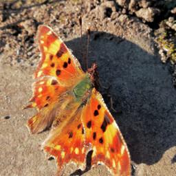 butterfly closeupshot nature sunny april