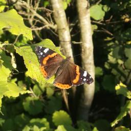 freetoedit kelebek butterfly