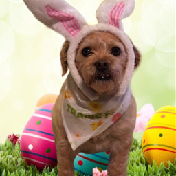 freetoedit easter dog cute puppy