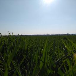 sun grassfield field sky like