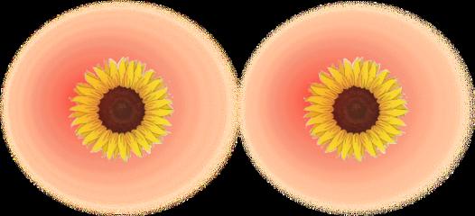freetoedit blush sunflower aesthetic freckles