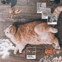 freetoedit домаспиксарт кот ренессанс полароид