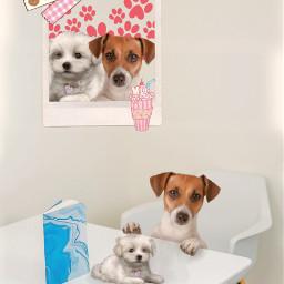 freetoedit dog doggie ecwalldecorations walldecorations