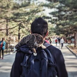 catlover pet park freetoedit