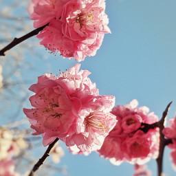 springflowers boken sky
