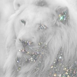freetoedit white lion leo zodiacsymbols