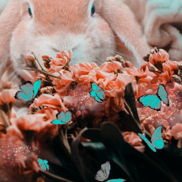 freetoedit creative madewithpicsart picsart imagination interesting fantasy tumblr beauty nature rabbit remixit remixed