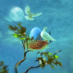 peaceful calm surreal birds egg freetoedit irceggdecoration eggdecoration