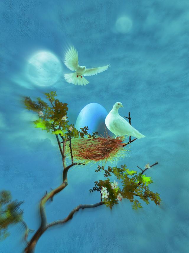 #peaceful #calm #surreal #birds #egg #freetoedit