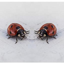 freetoedit mirror ladybug