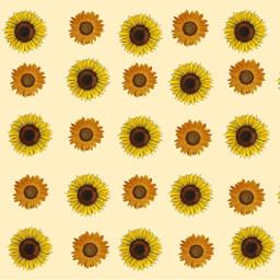 freetoedit background sunflower sunflowerbackground eczoombackgrounds zoombackgrounds