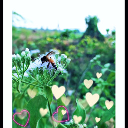 mobilephotography bee green nature naturelovers