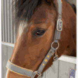 horse loveher cute cutie border freetoedit