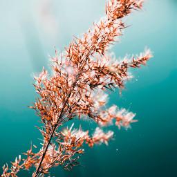 freetoedit nature naturephotography madewithpicsart picsart beautiful