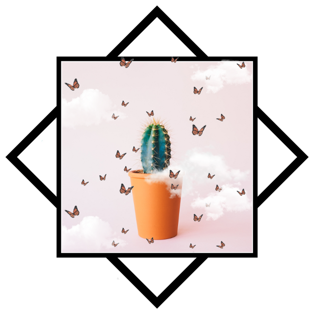 #freetoedit #cactus #butterfly #clouds