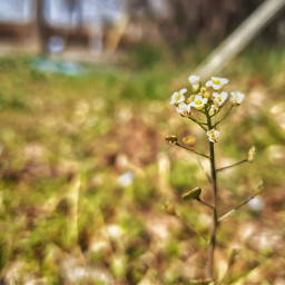 freetoedit nature spring flower
