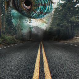 freetoedit eye unsplash lizard street
