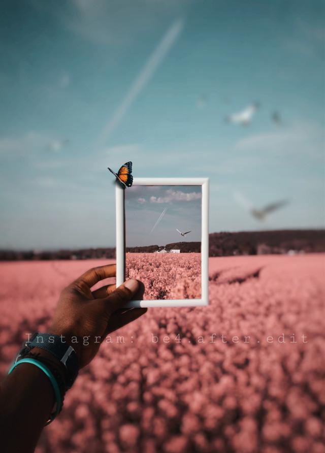 #freetoedit #interesting #blossom #japan #asian #china #photography #tokio #germany #bonn #cologne #flower #spring #sommer #love #instagram