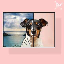 freetoedit pet art faceart dog ftestickers
