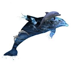 freetoedit dolphin