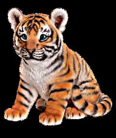 freetoedit tiger tigers animal animals
