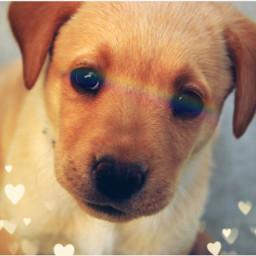 cutedog puppy cuteanimal rainbow freetoedit