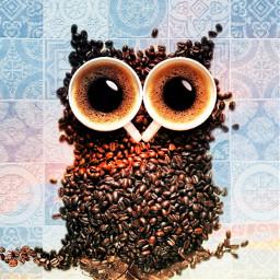 freetoedit owl irccupofjoe cupofjoe