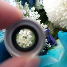 freetoedit photo flowers lens