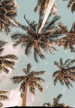 freetoedit vintage palmtrees beach aesthetic
