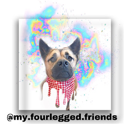 editedbyme doggo dogsofpicsart freetoedit