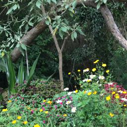 freetoedit green greenspace vegetation flowers pcgreenminimalism greenminimalism