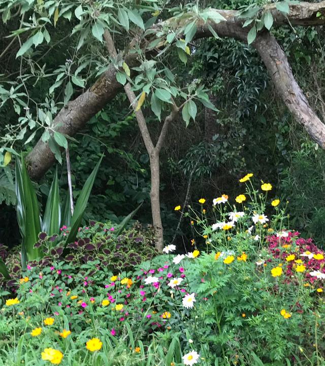 #freetoedit #green #greenspace #vegetation #flowers #naturalphotography #wood @laura60190123