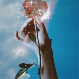 freetoedit picsart papicks earthday rose