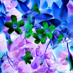 contrast neon colors colores flowerpower