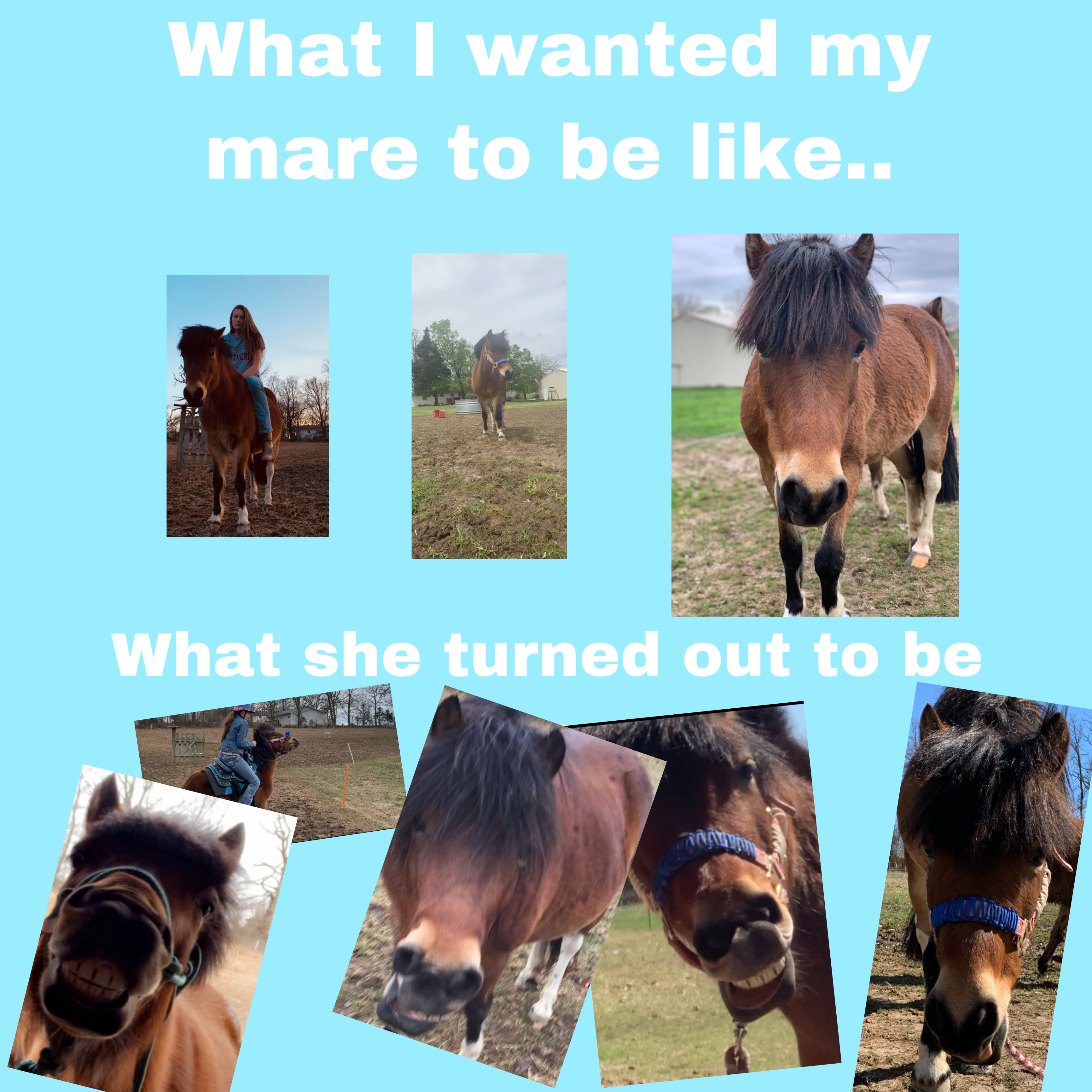 Mare Horse Youtube Bff Hearthorse Image By Bridgette