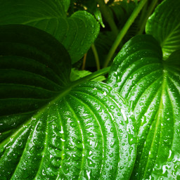 green raindrops greenminimalism pcgreenminimalism