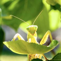 nature green greeneyes insect minimal pcgreenminimalism greenminimalism