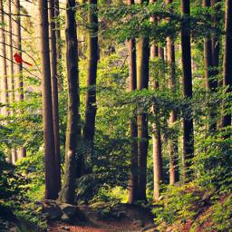 freetoedit nature outdoors naturelover adventure