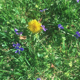 flowers outdoors pcgreenminimalism greenminimalism