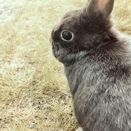 garden stayhome cutie rabbit