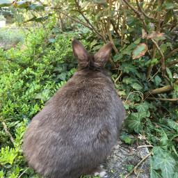 garden nofilter photography rabbits green