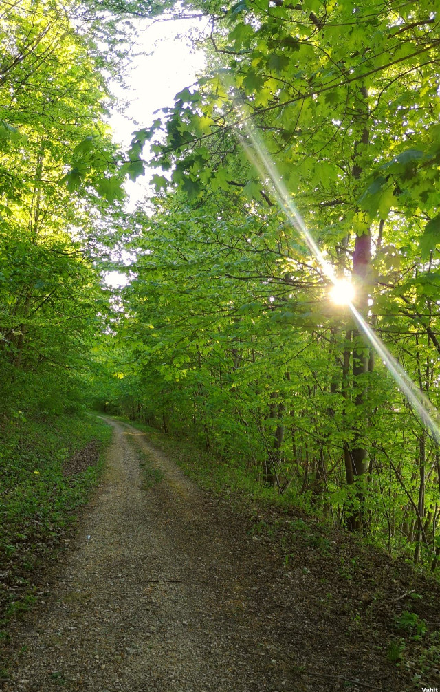 #freetoedit #pathway #tree #sunlight #green #nature #myphotography