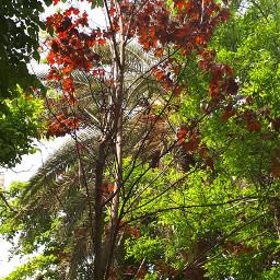 trees colors natura